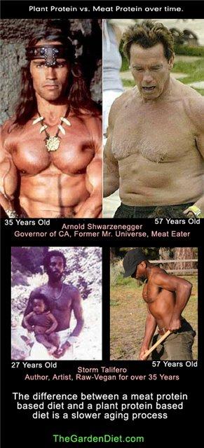 Разница между сыроедом и обычным человеком.